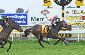 OUR DRAHMA QUEEN wins for first time - New Plymouth 20th November 2015 - Click to enlarge