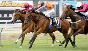 DARCI'S DREAM winning at Te Aroha 14th February 2014 Picture courtesy of Race Images Palmerston North