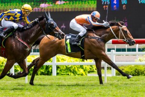HIDDEN PROMISE wins his first race in Singapore 19th Feb 2017 - Click HERE to enlarge