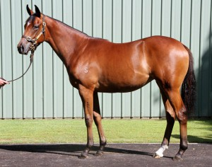 Yearling Filly by POUR MOI out of LIONESS