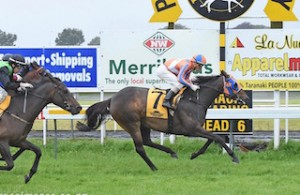 Our Drahma Queen wins her first race at New Plymouth. Click to enlarge