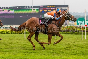 SECRET SPICE winning Singapore 18th Oct 2015. Click to enlarge
